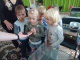 Pažintis su vabzdžiais